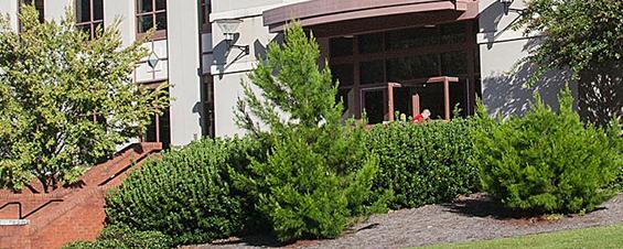 pinetum